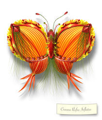 Butterfleur014-tcherevkoff