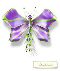Butterfleur 36 by Michel Tcherevkoff