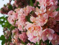 pink flowers by Victoria Hernandez