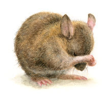 Mouse by Carmen Hevia