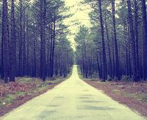 Pine Trees by Fabio Guimaraes