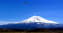 Seagull Over Mt. Shasta by David Fouch