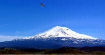Seagull Over Mt. Shasta von David Fouch