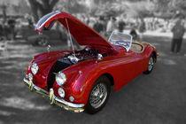 Jaguar von David Fouch