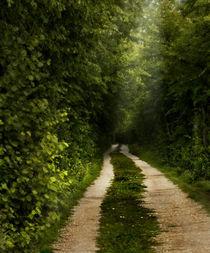 lonely path by Fredrik Sjöberg