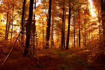 Deutschland / Germany 13 - Herbstwald / Autumn Hideout by Johannes Ehrhardt