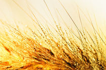 Goldener Oktober  by Cornelia Dettmer