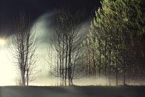 Wald von simonpictures