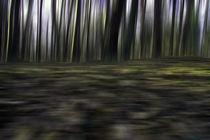 Wald - abstrakt - Bewegung von Jens Berger