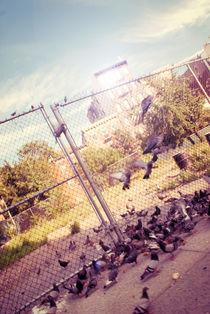 PigeonRide by Nicolas Baur