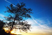 Tree in blue sky von Andrea Capano