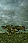 Owls-03