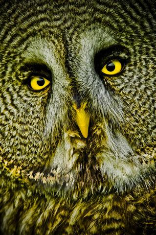 Owls-04