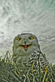 Snowy owl von Stefan Antoni - StefAntoni.nl