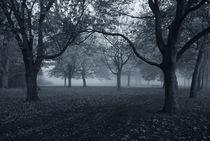Delta Park von David Fouch