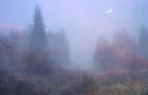 im Nebelwald by Franziska Rullert