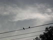Birds In Phone Wires von godknowsme
