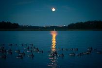 Geese in Moonlight by Riku Nikkila