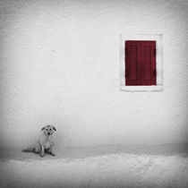 Lonely Dog von Carsten Meyerdierks