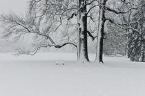 Winter Dream by Jan-Patrick Schmitz