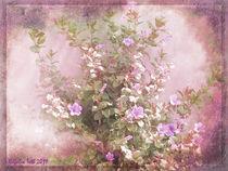 Hibiscus the Flower of Pride von Rozalia Toth