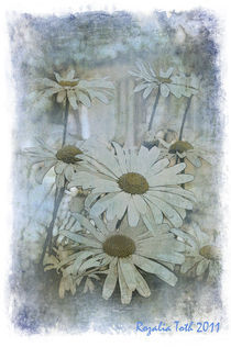 Daisy Blues by Rozalia Toth