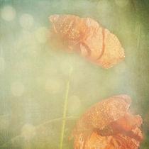 Poppy-tears