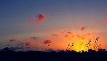 Marshes Sunset von Damien Yoccoz