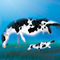 Sea-cow-8x10-flattened
