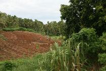 Fijian hillside by catbou