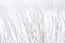 frozen grass in the winter von Kris Shopov