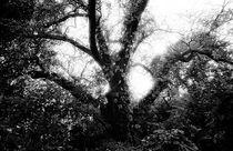 The tree by Andrei Becheru