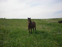 Horse in springtime Greece by Alkisti *