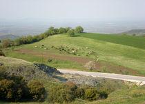 Cows grazing in spring Greece von Alkisti *
