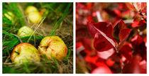 Autumn of Sweden von Marcus Hermansson