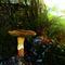 Mushroom-001