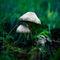 Mushroom-003