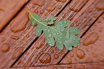 Einsames Eichenblatt nach dem Regen von Christine Amstutz