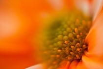 Leuchtendes Orange by Christine Amstutz