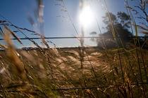 countryside by Dahlia Foo