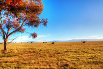 Sheep von Dahlia Foo