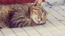 Cat by Laura Font Sentis