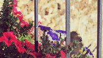 Primavera by Laura Font Sentis