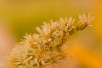Zauberhafte Blüte by Christine Amstutz