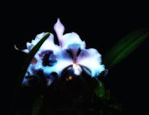 Neon Orchid by Gabriel Mendez