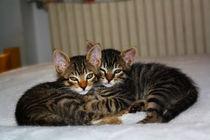 Kittens von Laura Marchesini