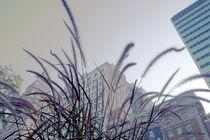 Dreamy-city