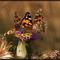 Schmetterlinge2