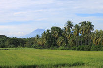 Volcano, Palms Landscape in Nicaragua by Charles Harker
