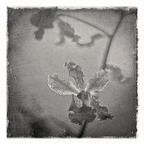 Orchidaceae3 by ricardo junqueira